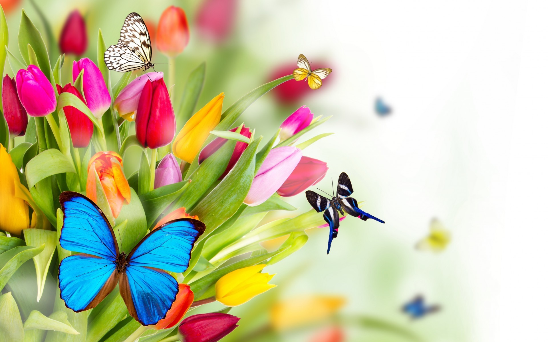 Lovely Cute Girl Hd Wallpaper Springtime Animals And Flowers Wallpaper 67 Images