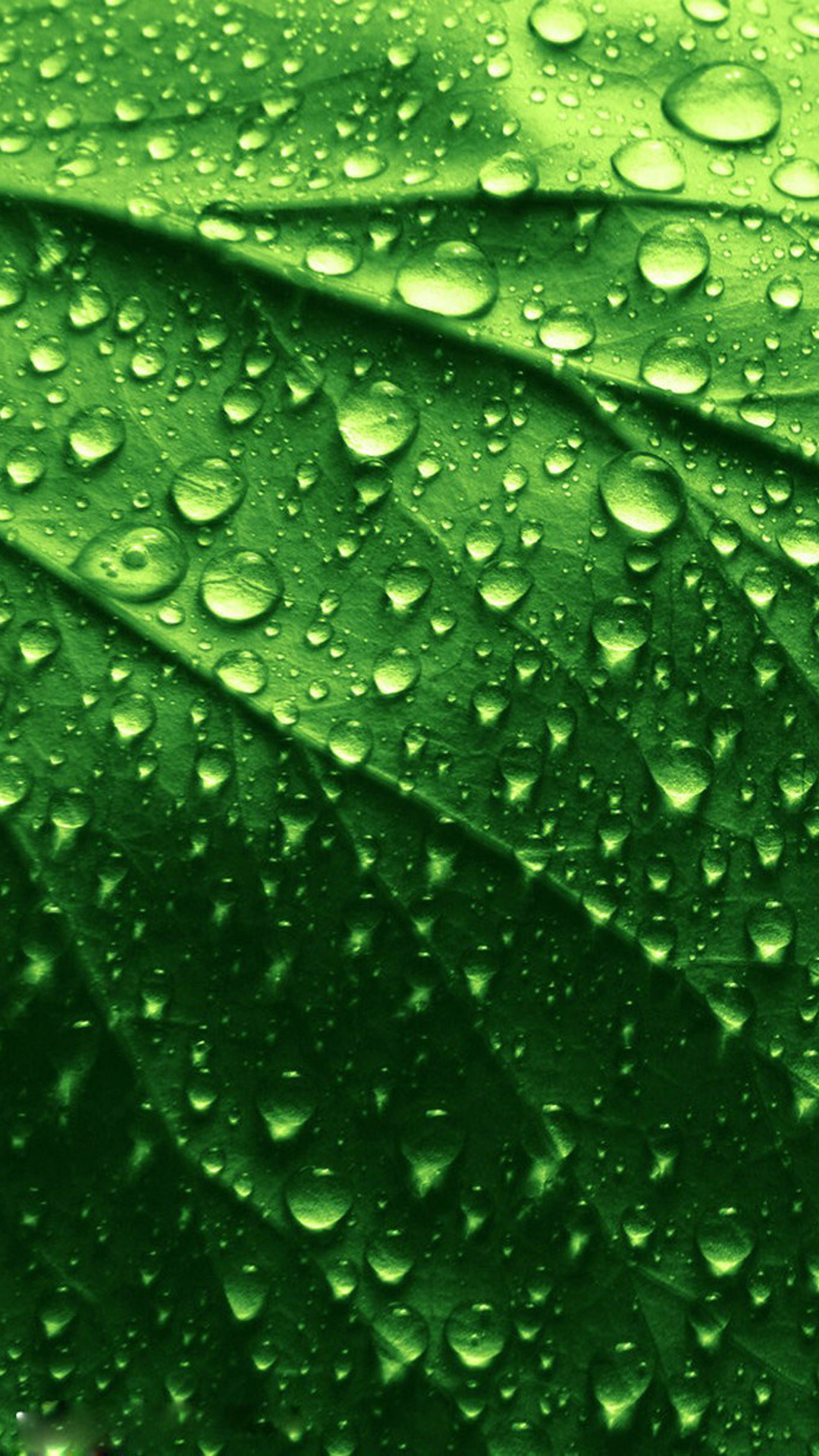 green leaf wallpaper hd