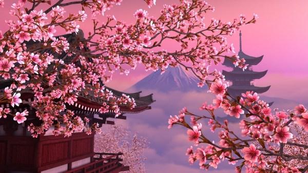 Japanese Cherry Blossom Wallpaper 1920x1080 59