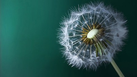 hd awesome wallpapers desktop 1080p macro background dandelion nature quality stunning