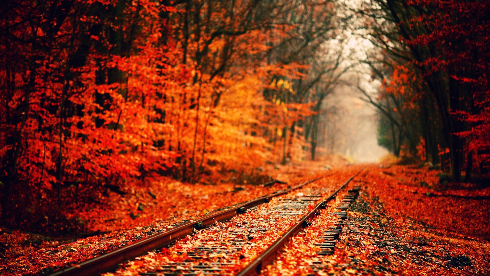 Stunning Fall Wallpapers Fall Computer Backgrounds 76 Images