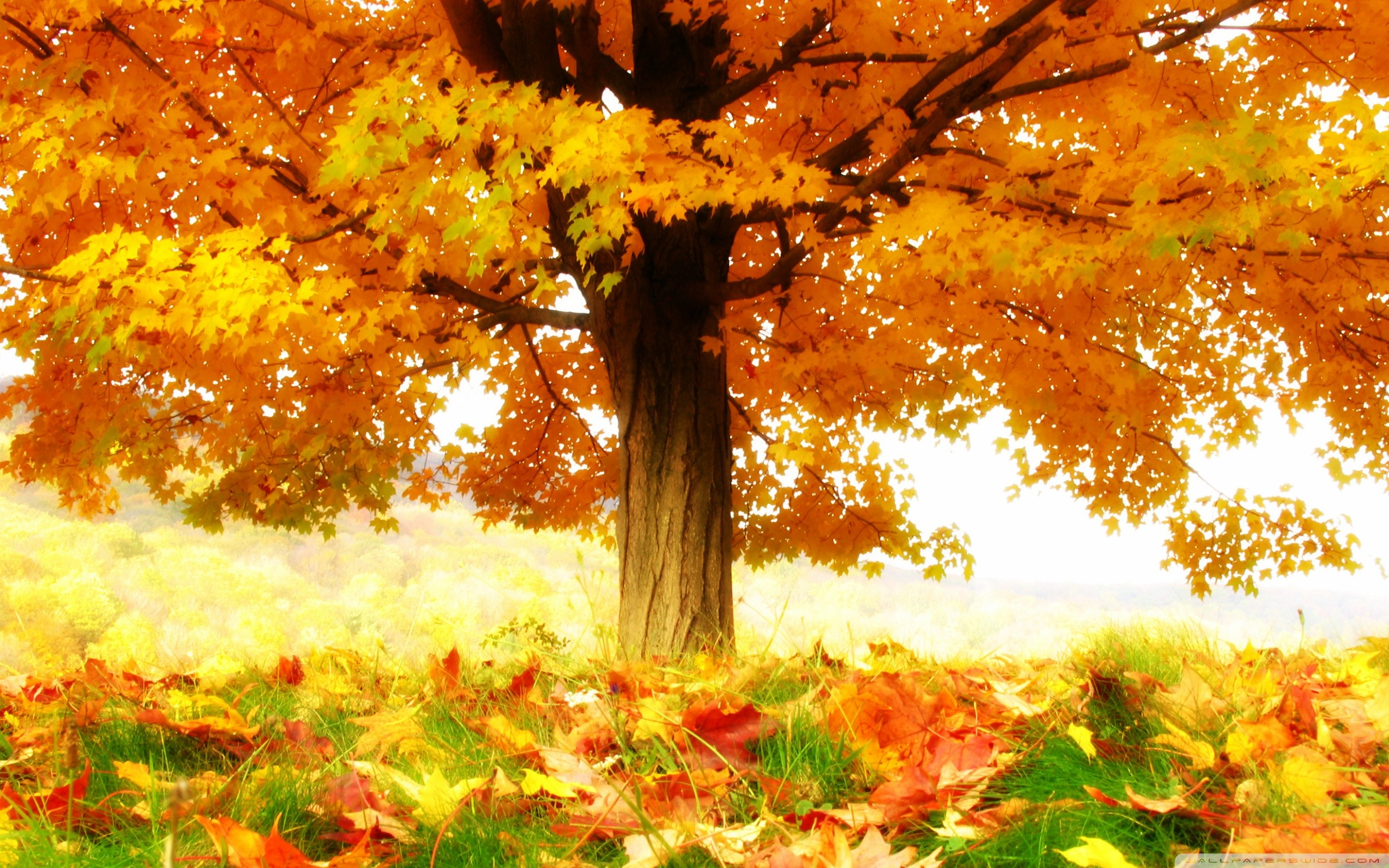 Red Fall Leaves Iphone Wallpaper Anime Fall Wallpapers 59 Images