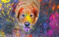 Paint Splatter Wallpaper (73+ images)