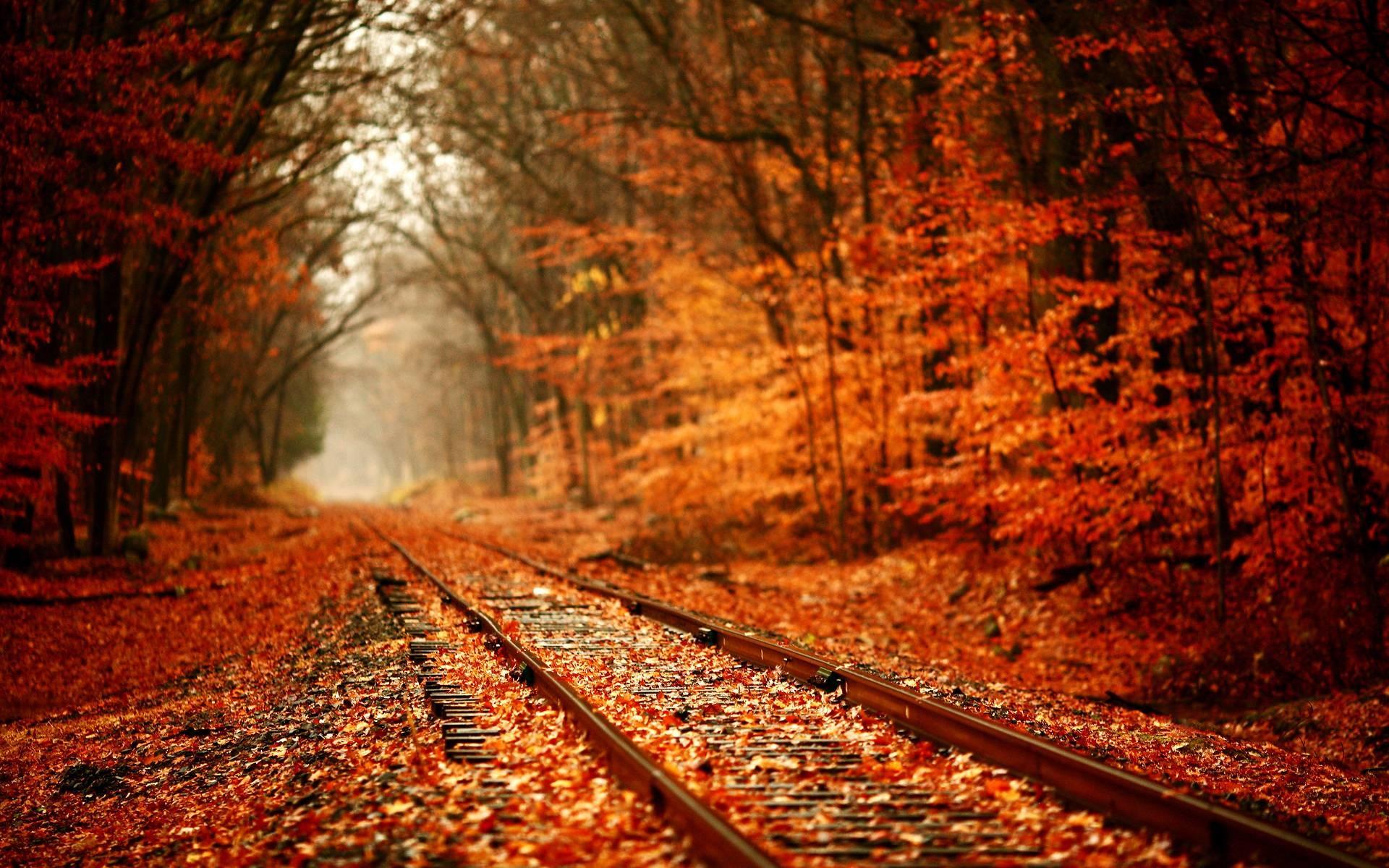 Fall Foliage Wallpaper Widescreen Desktop Wallpaper Autumn Leaves 65 Images