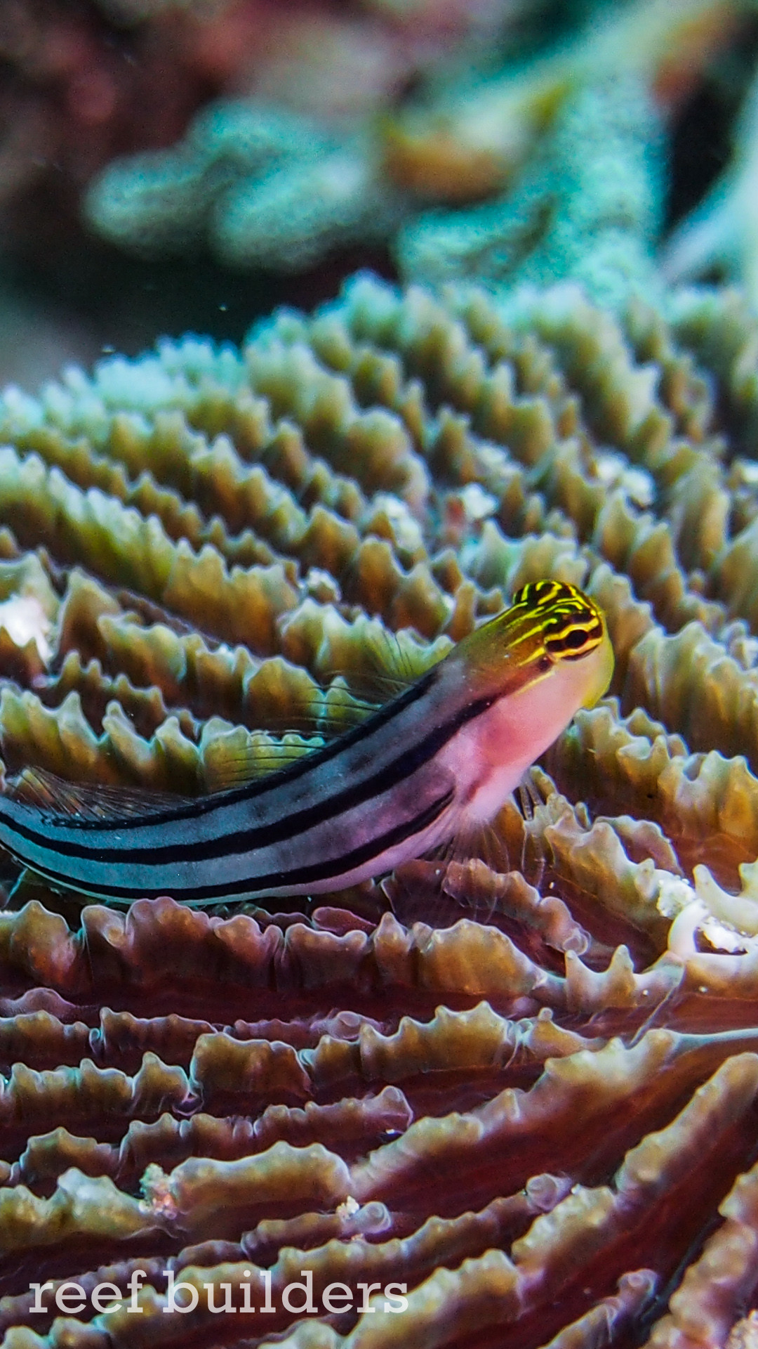 Fish Live Great Barrier Reef