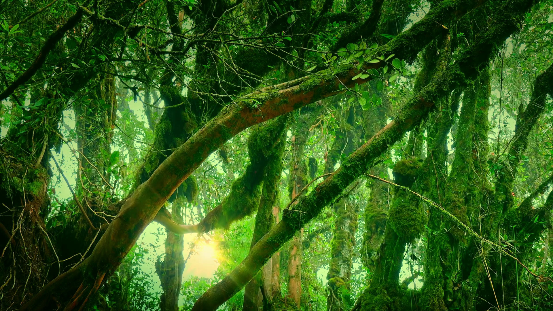 Fall Desktop Wallpaper Widescreen Free Enchanted Forest Background 60 Images