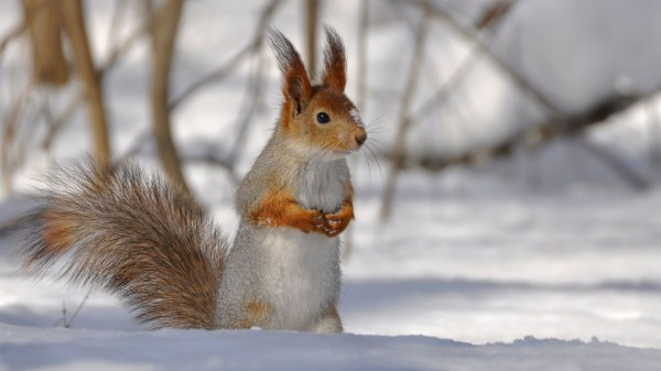 Winter Snow Animals Desktop