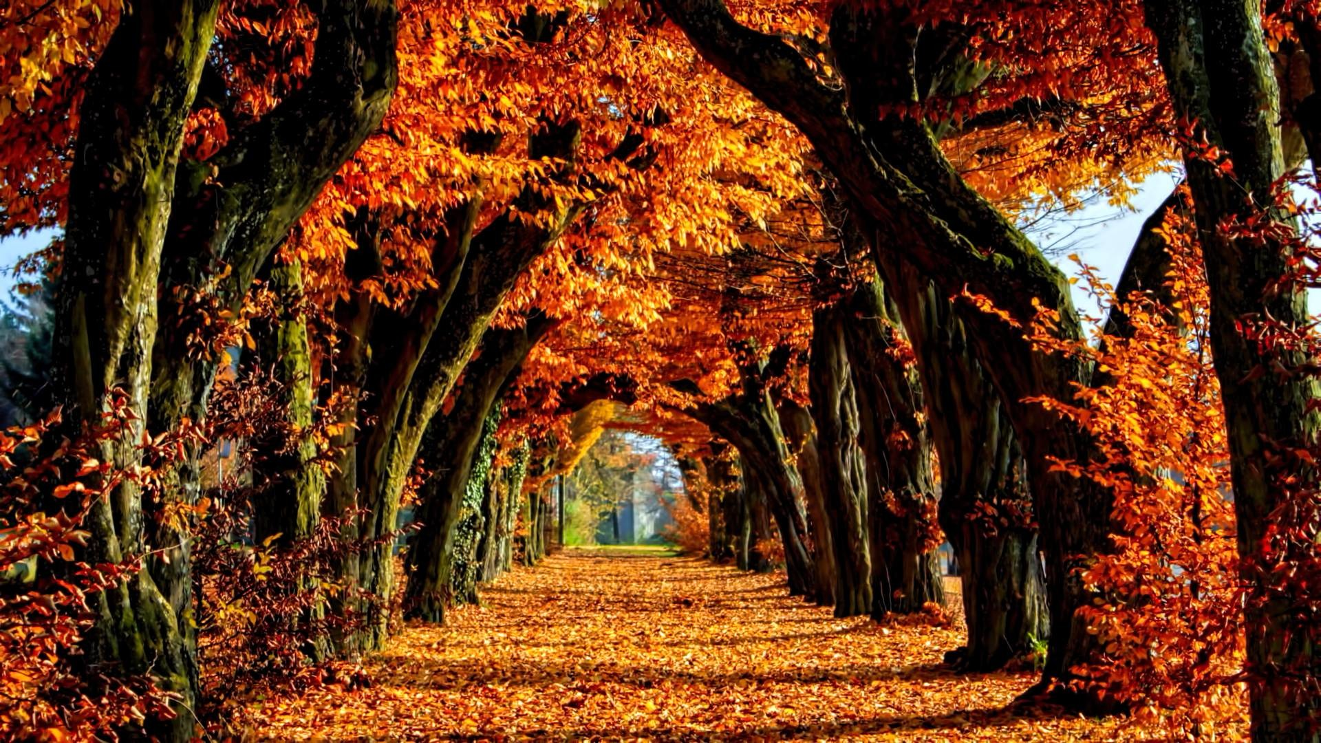 Free Fall Wallpaper For Iphone 6 Fall Color Wallpaper 49 Images