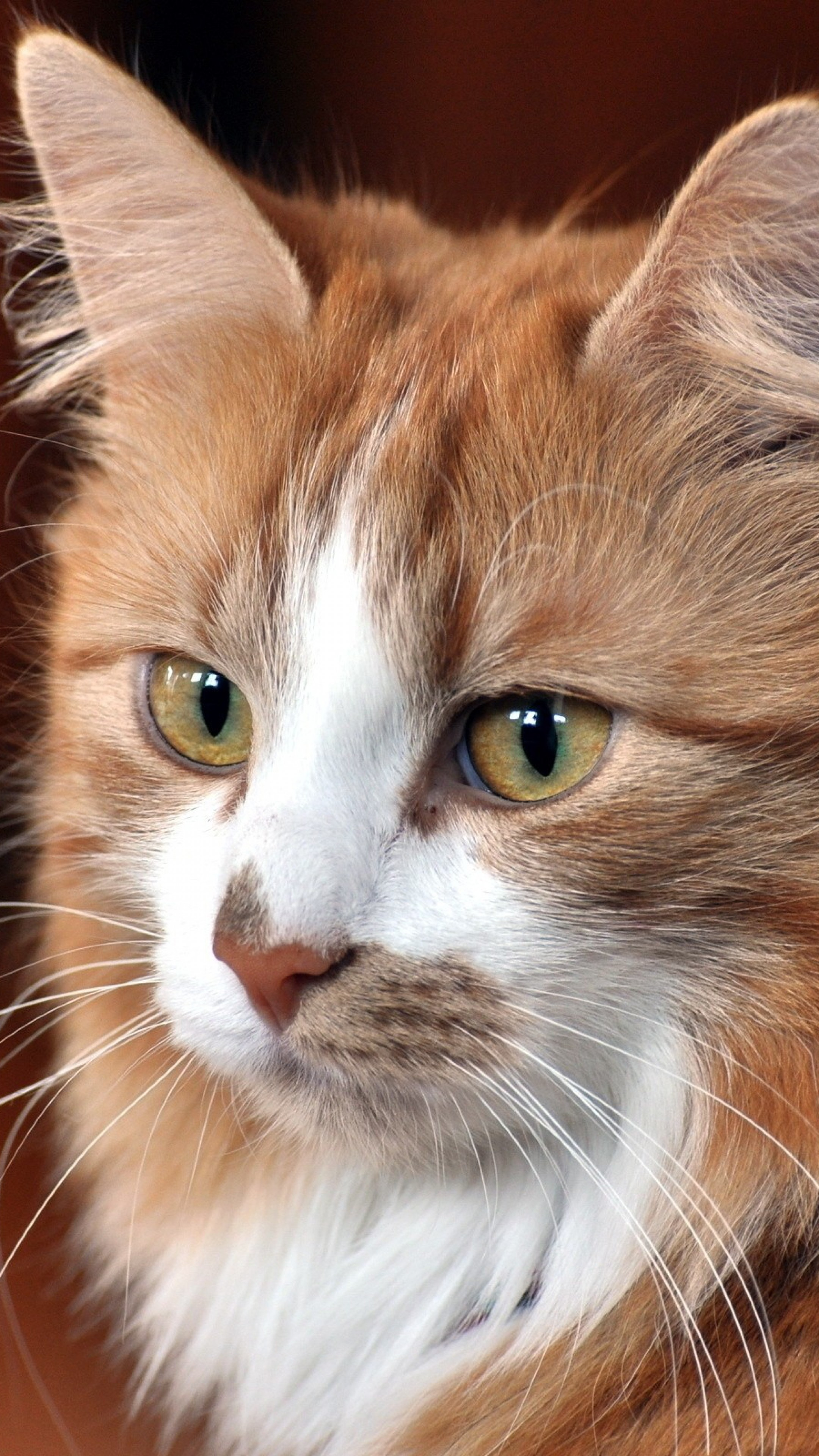 Cute Animal Wallpapers Free Download Cool Cat Wallpapers 71 Images