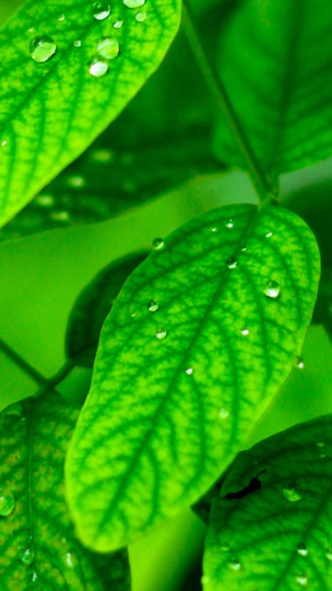 Banana Wallpaper Iphone 6 Green Leaf Wallpaper Hd 70 Images