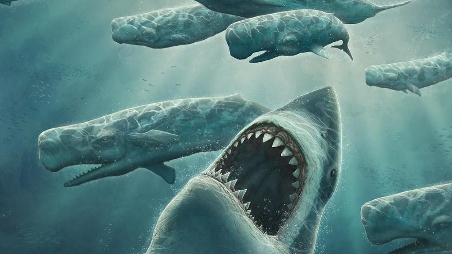 megalodon wallpaper hd (65+ images)