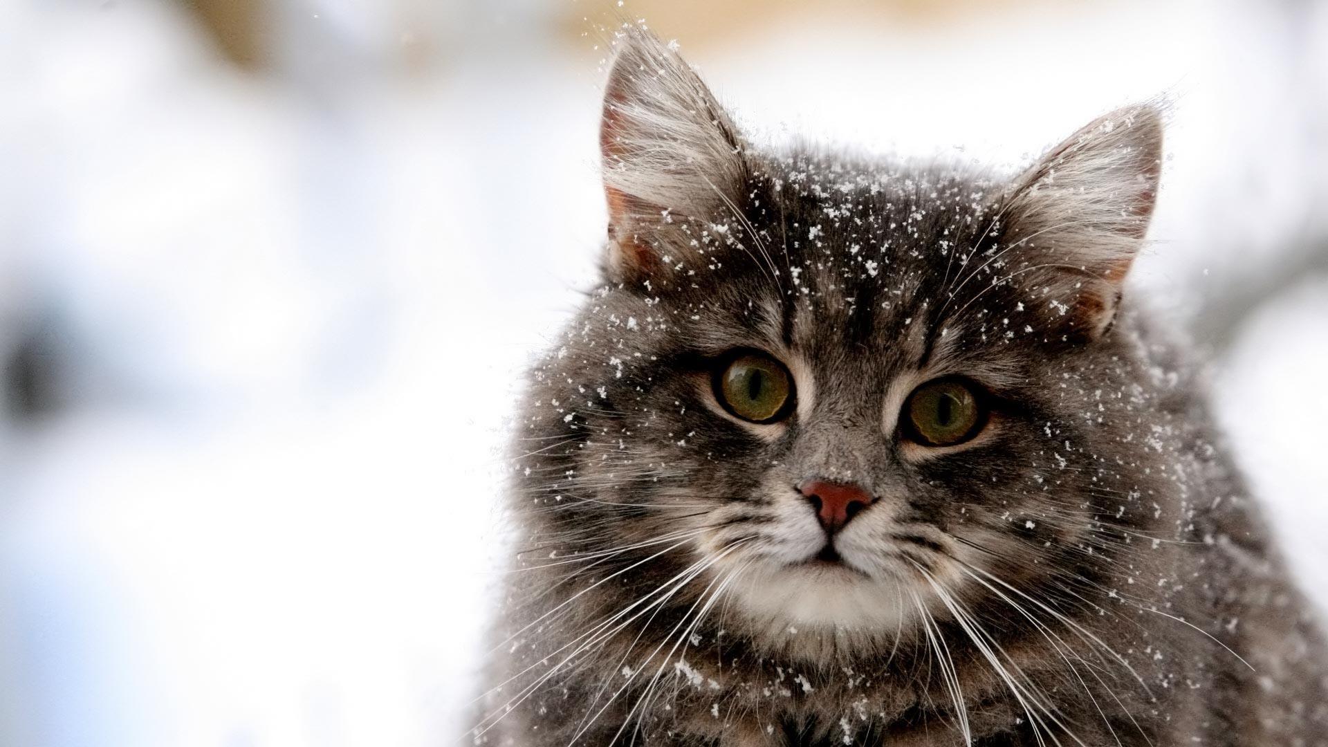 cat wallpaper and screensavers