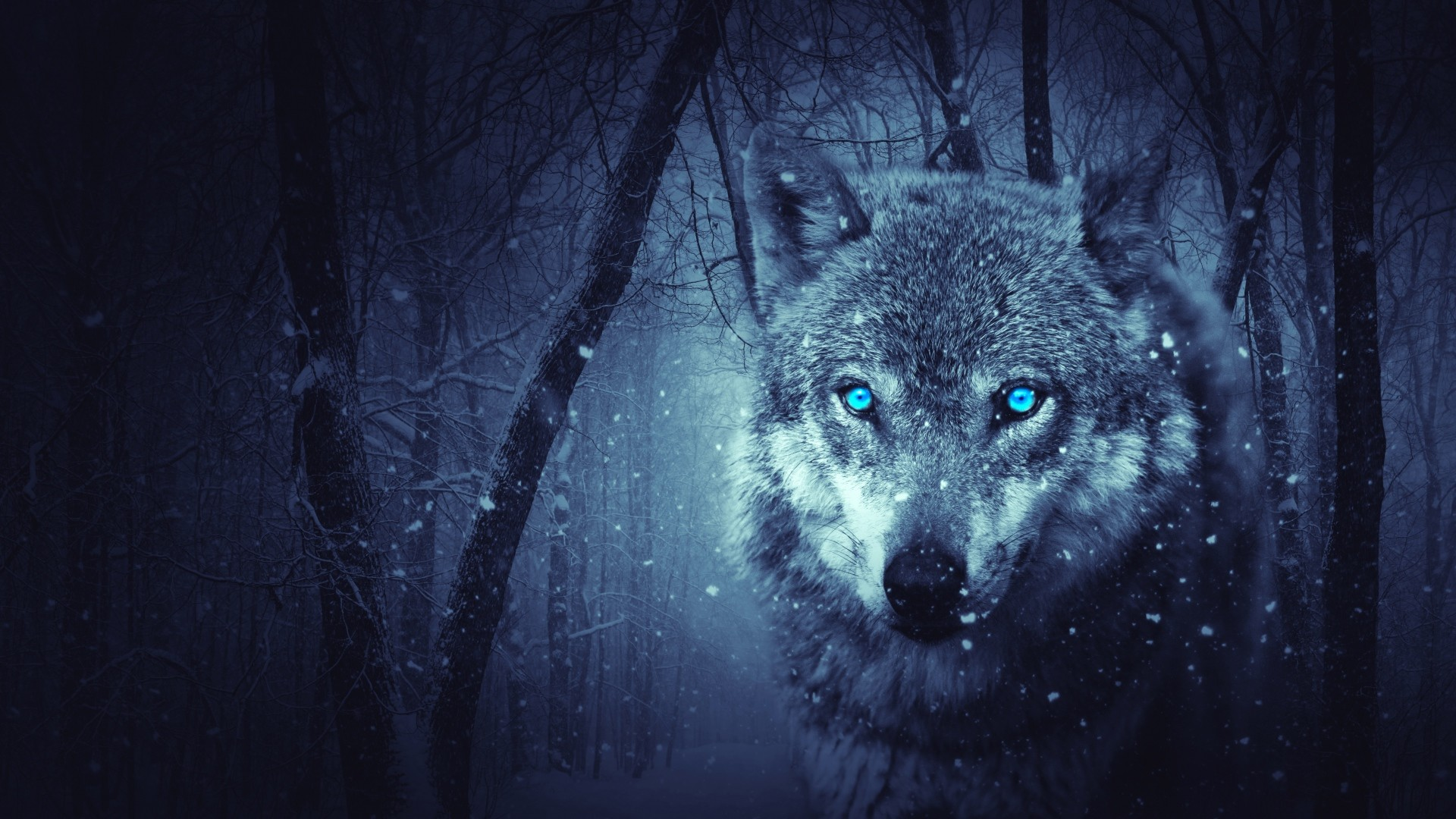 Free Fall Animal Wallpaper Wolf Art Wallpaper 79 Images
