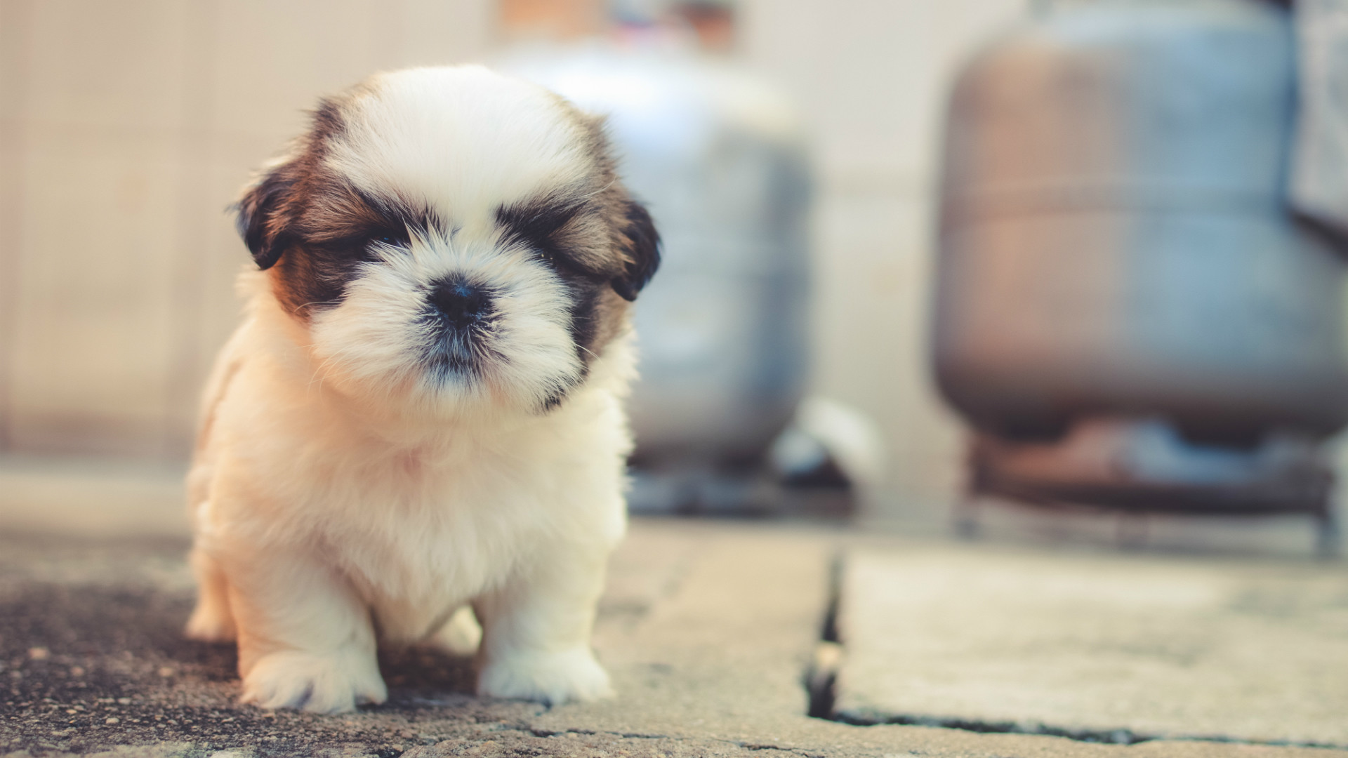 cute puppies wallpaper hd