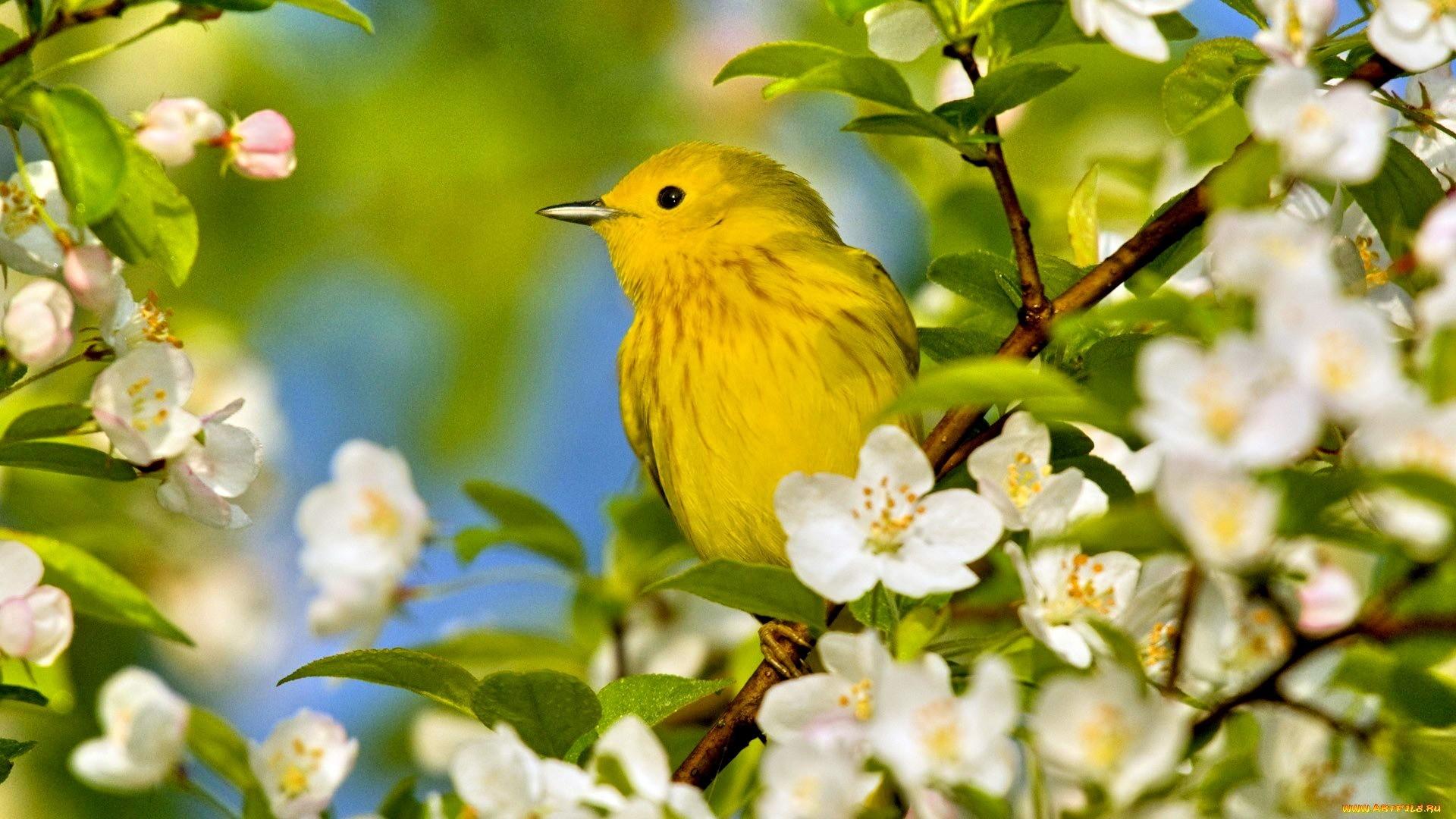 Branch Wallpaper Cute Spring Bird Desktop Wallpaper 81 Images
