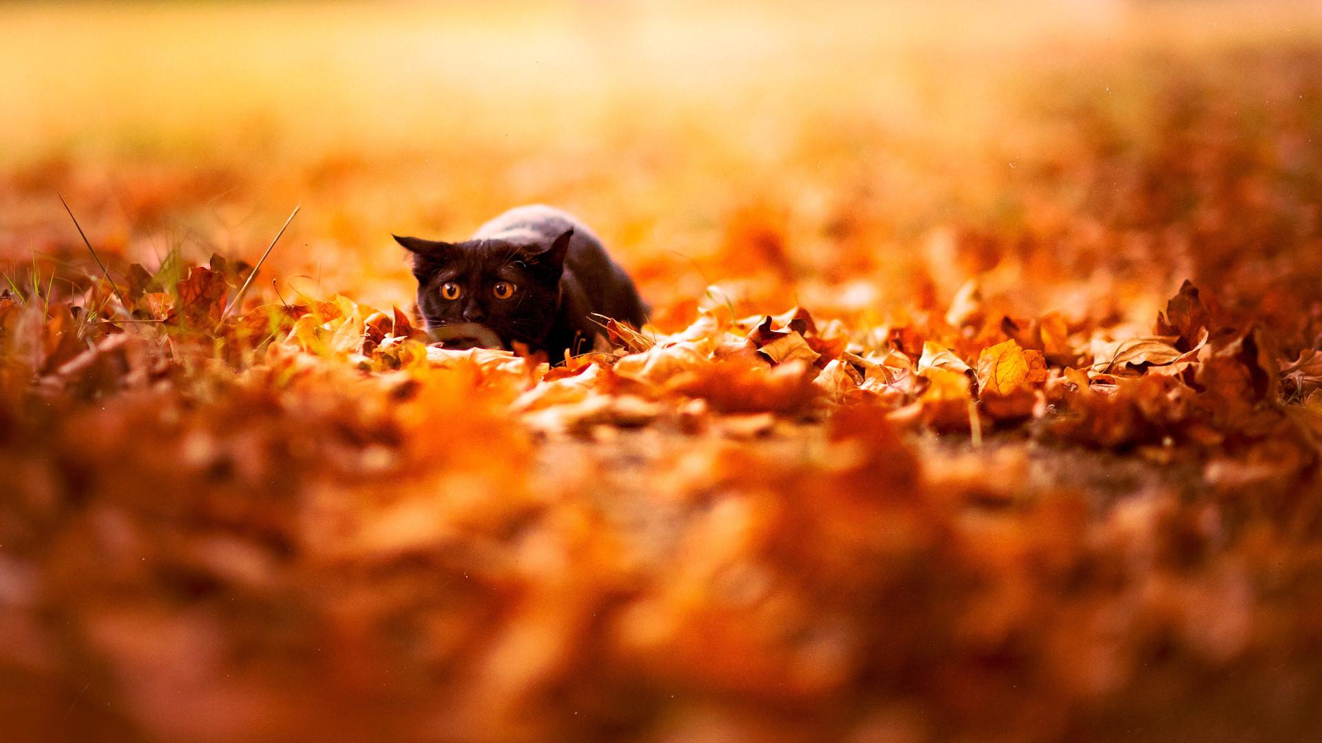 Fall Leaves Desktop Wallpaper Backgrounds Desktop Wallpaper Autumn Leaves 65 Images
