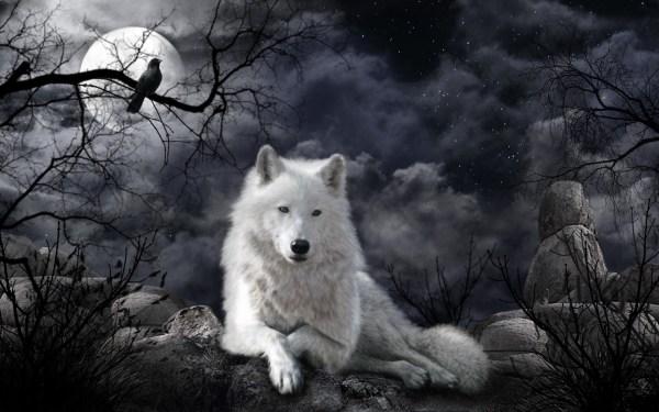 White Wolves Desktop Wallpaper