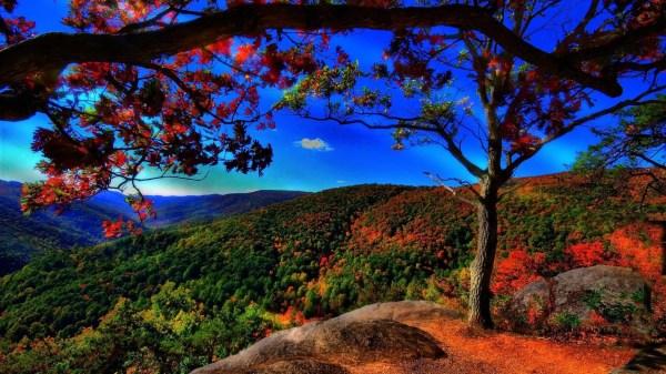 Free Fall Desktop Wallpaper Nature