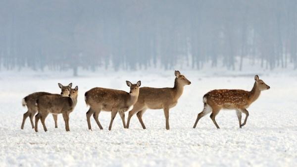 Snow Landscape Winter Animals