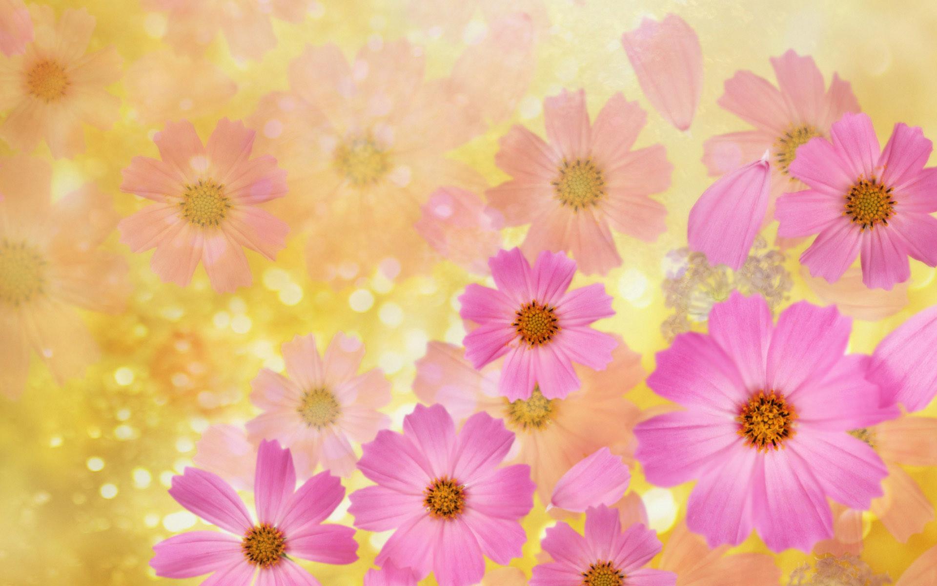 Pink Wallpaper With Cute Puppy Golden Retriever May Flowers Wallpaper Hd Desktop 66 Images