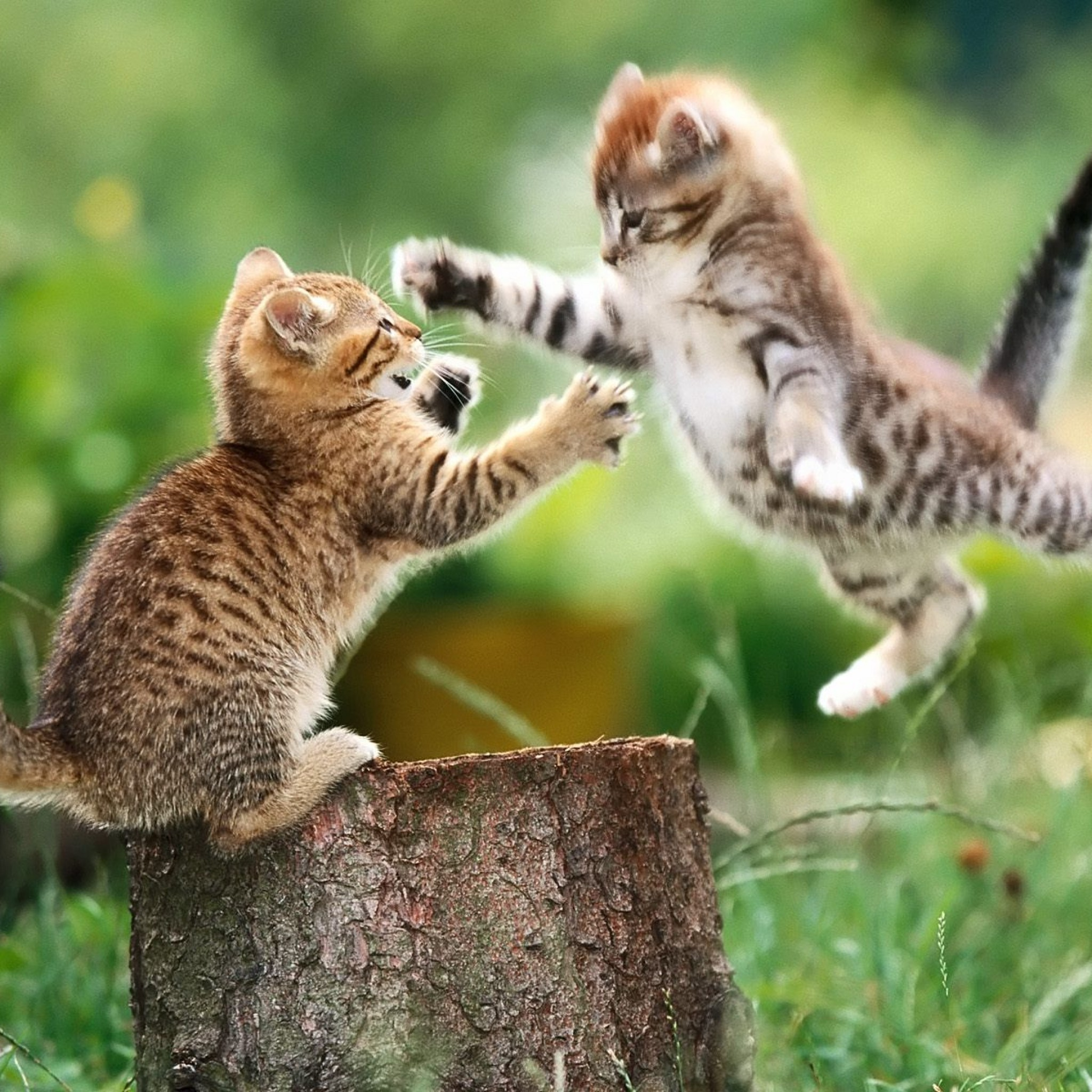 Epic Animal Wallpapers Epic Funny Wallpapers 51 Images