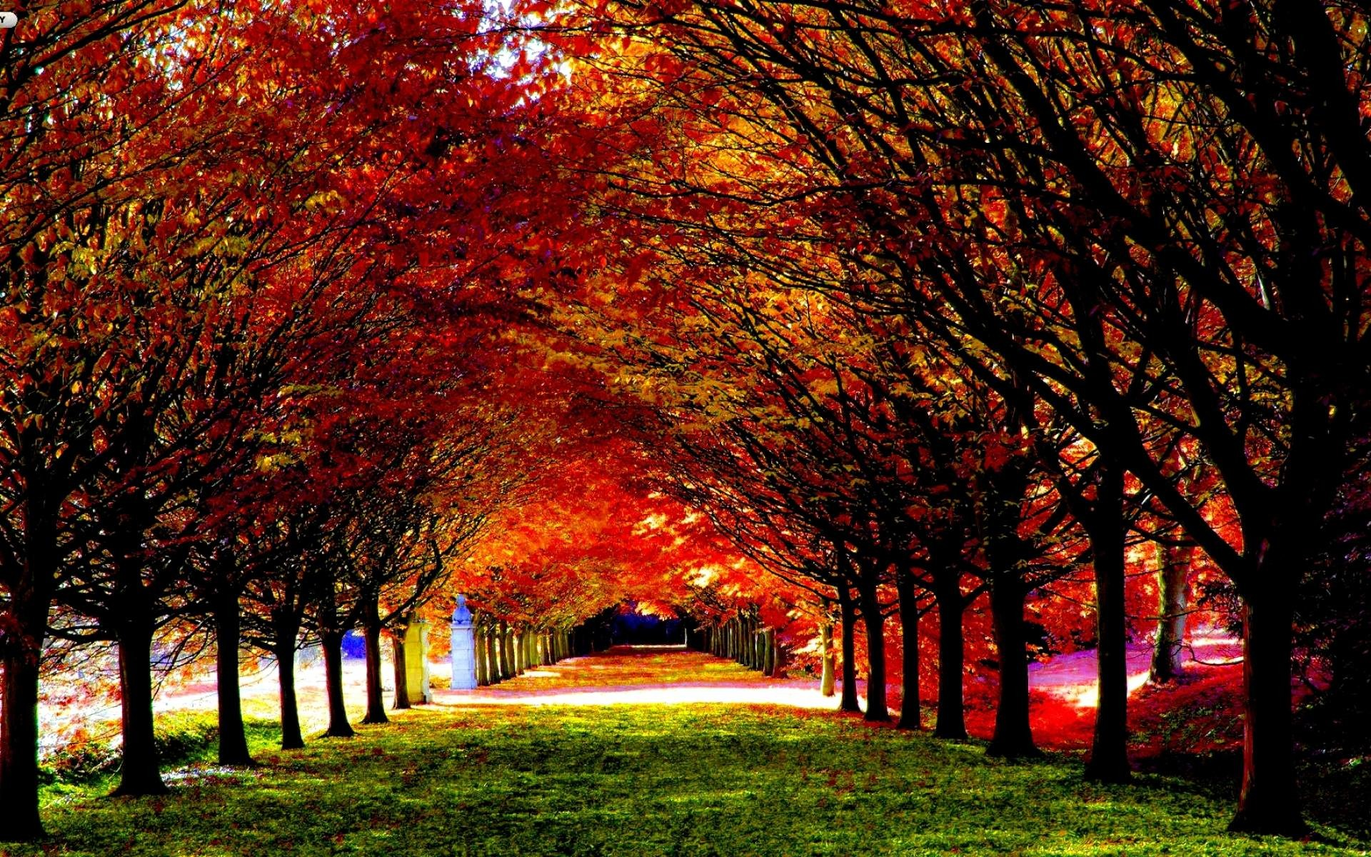 Autumn Tree Leaf Fall Animated Wallpaper 3d Fall Wallpaper 61 Images