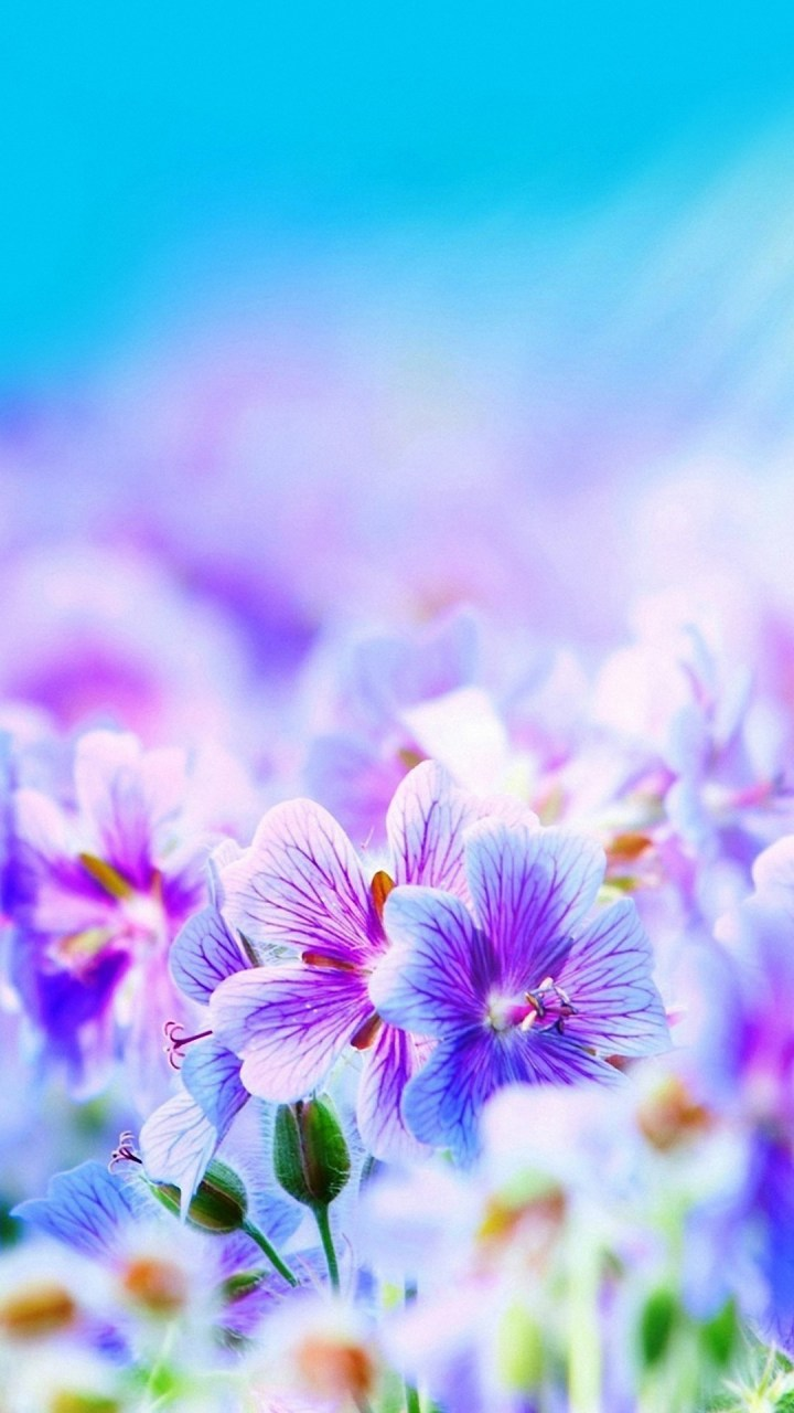 Pictures Of Really Cute Flowers Amatwallpaper