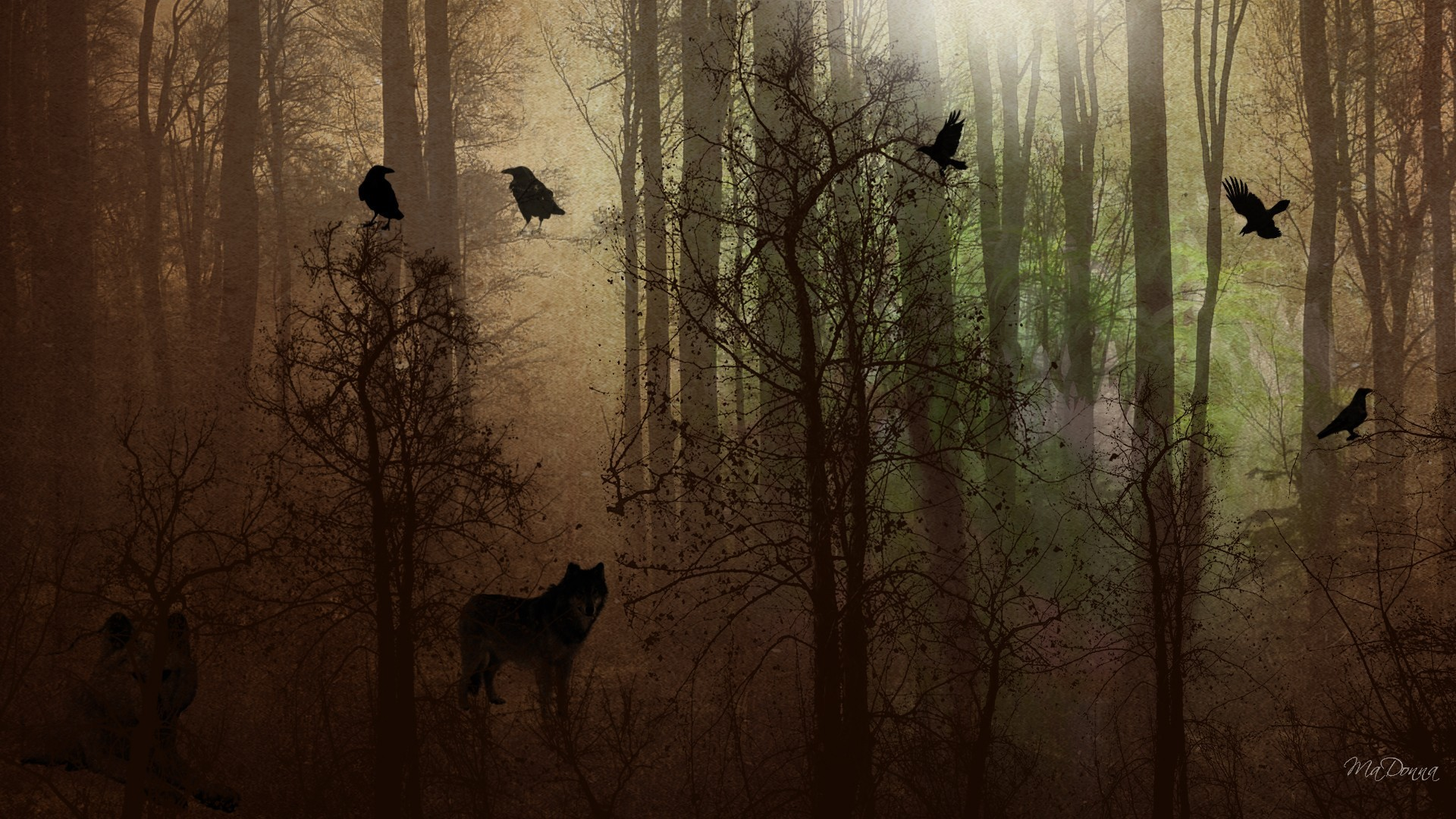 Girl In Woods Wallpaper Crow Desktop Wallpaper 67 Images