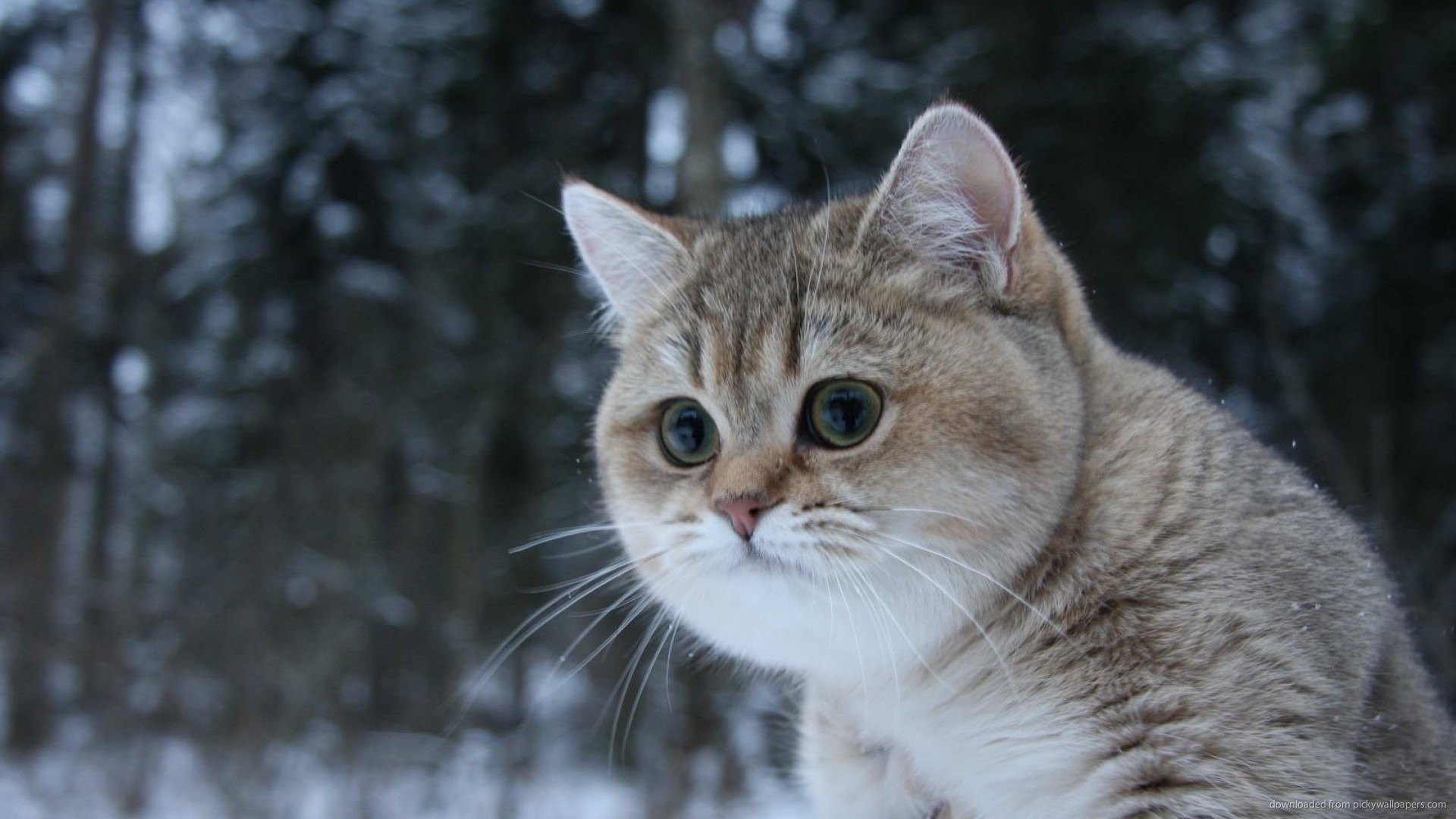 cat wallpapers and screensavers