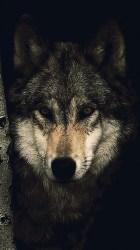 Wallpaper Dark Wolf 3