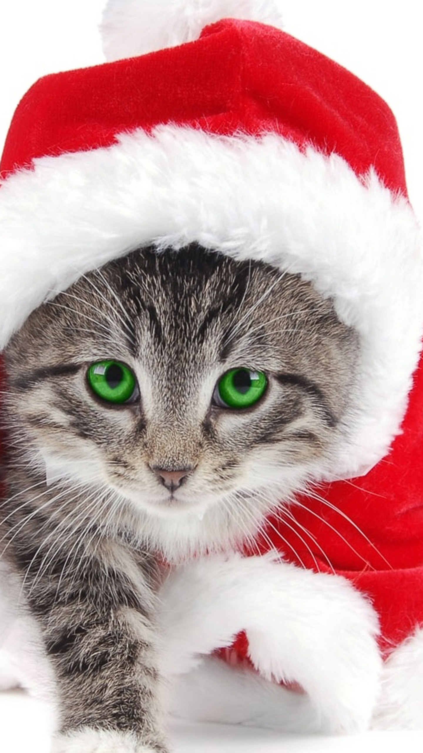 Cute And Adorable Wallpapers Christmas Cat Wallpaper 75 Images