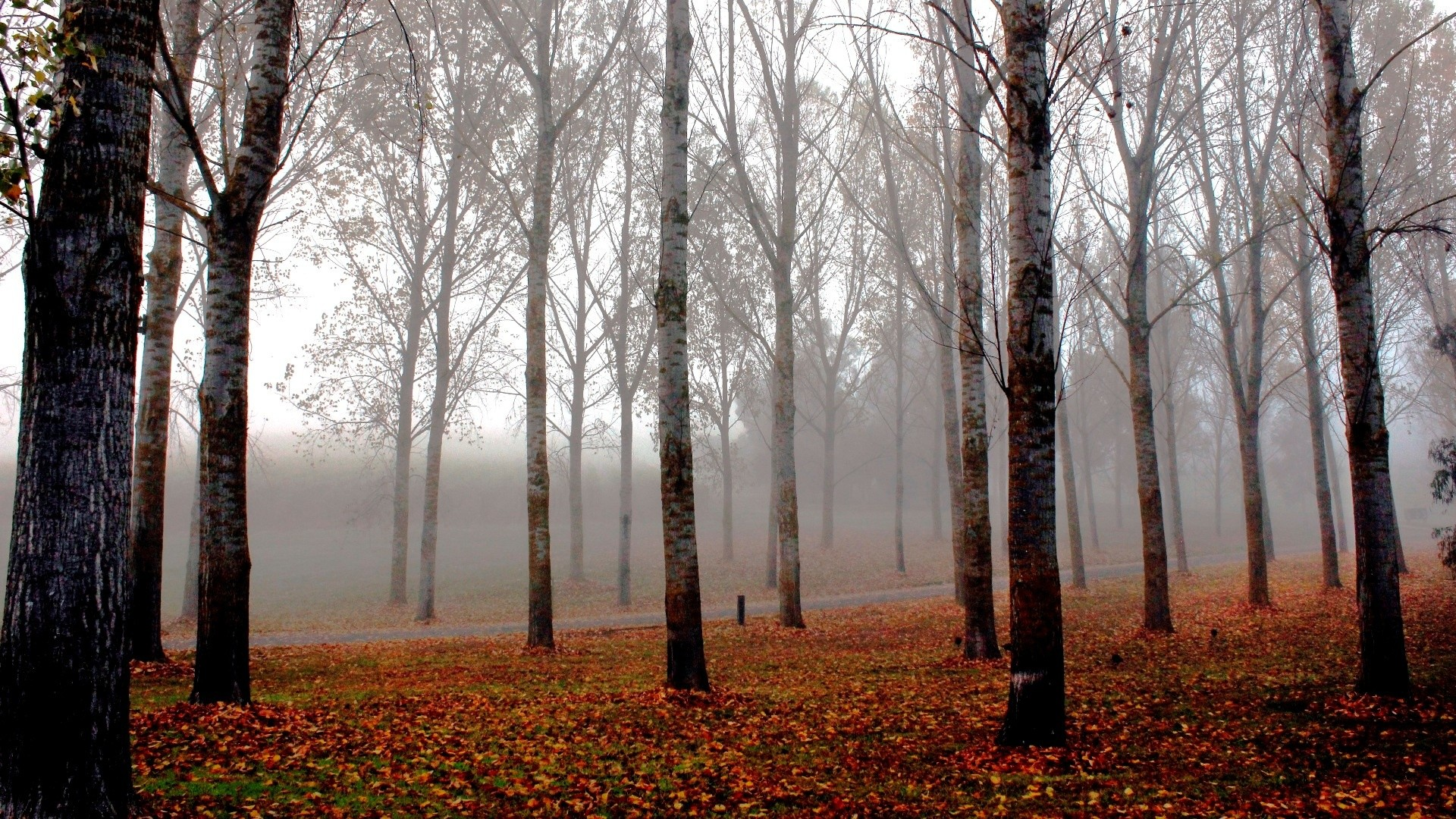 Free Widescreen Wallpaper Fall Early Fall Desktop Wallpapers 43 Images