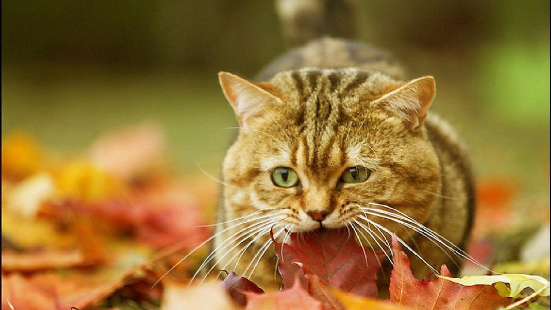 Fall Feather Wood Wallpaper Autumn Animal Wallpaper 65 Images