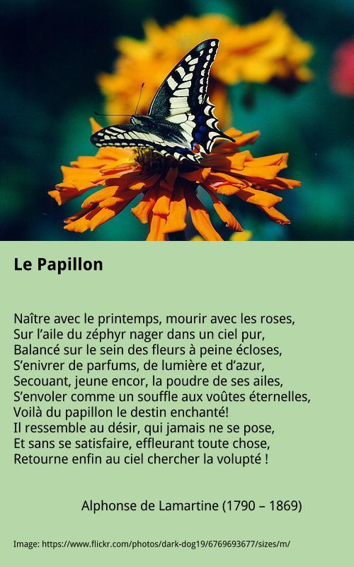 Lamartine – Le Papillon