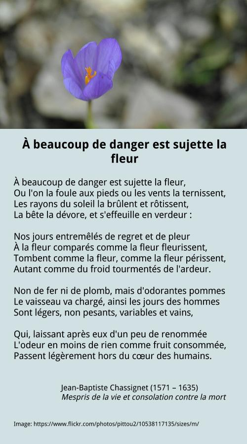 À beaucoup de danger est sujette la fleur