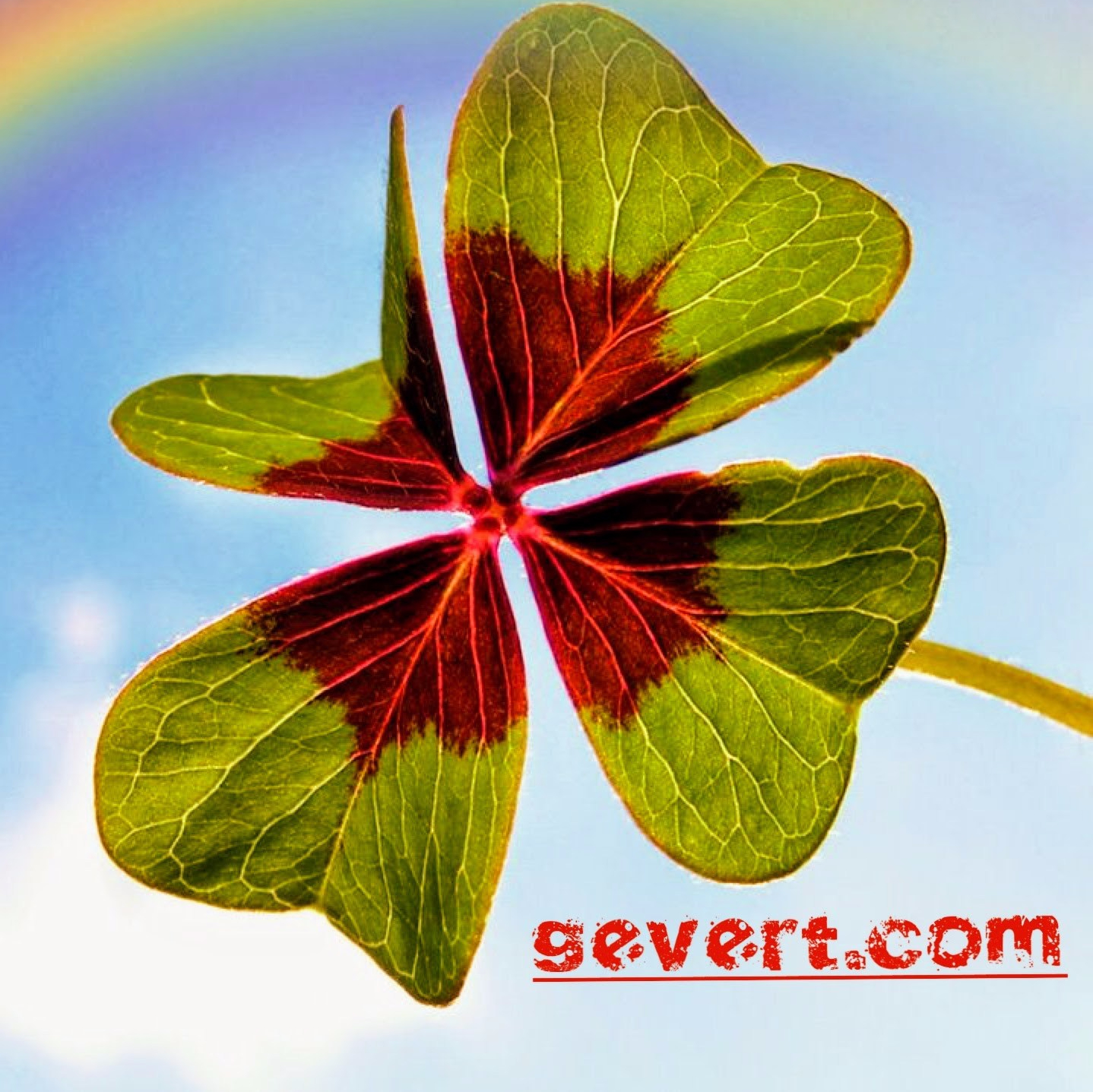 gevert.com