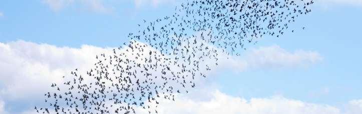 Vogelschwarm.jpg.3005503