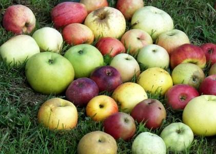 Las Manzanas de Javiera e Isidora