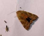Nachtvlinder 12 (Small)