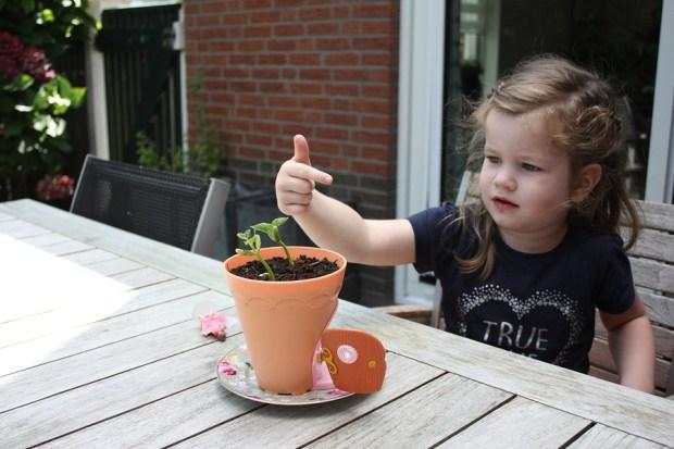my-fairy-garden-flowerpot-8