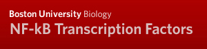 Boston University Biology NF-kB