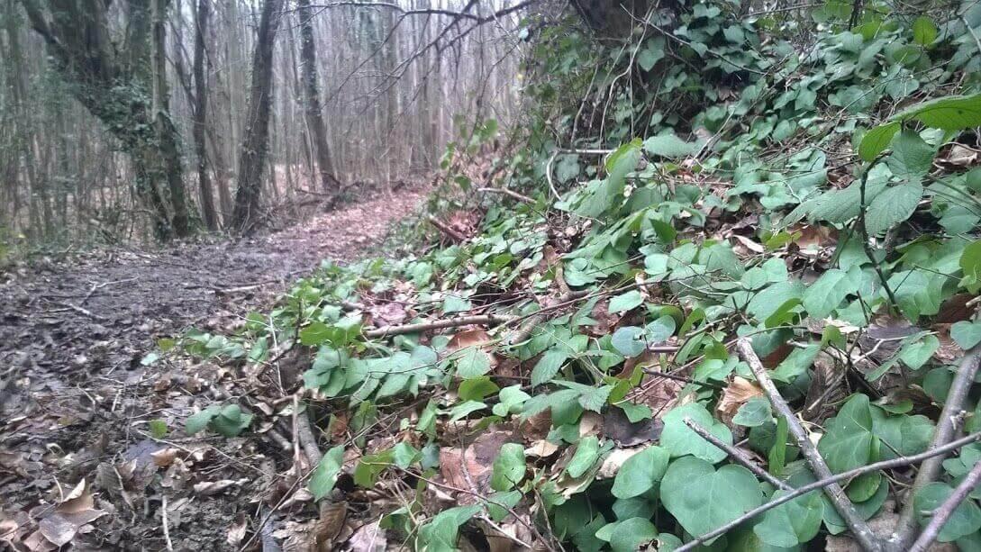 Polonezköy Ormanı kışın