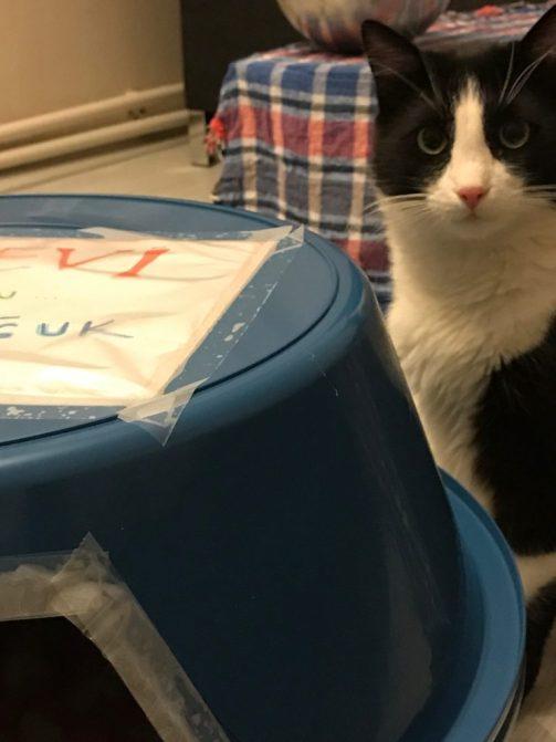 kedi_evi-gezengiller-kedi