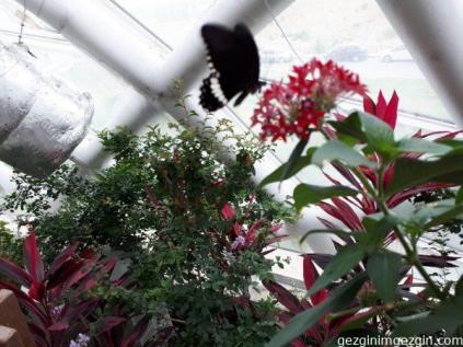 Konya Tropikal Kelebek Bahcesi