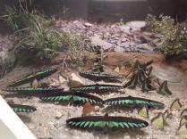 Tropikal Kelebek Bahcesi