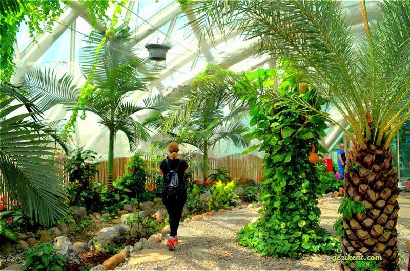 Seyahat; İç Dünyamıza Tutulan Bir Aynadır-Tropikal kelebek bahçesi