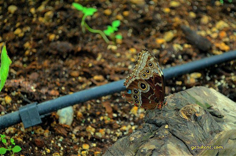 Konya Kelebek vadisi