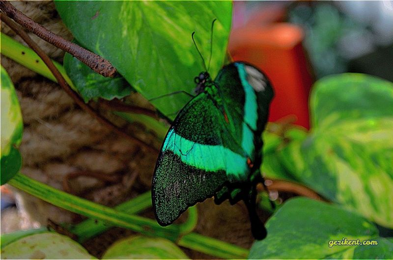 Konya tropikal kelebek bahçesine nasıl gidilir