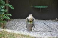O kuşlardan birisi