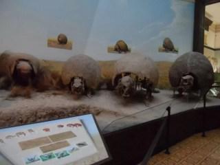Museo de La Plata'da 3